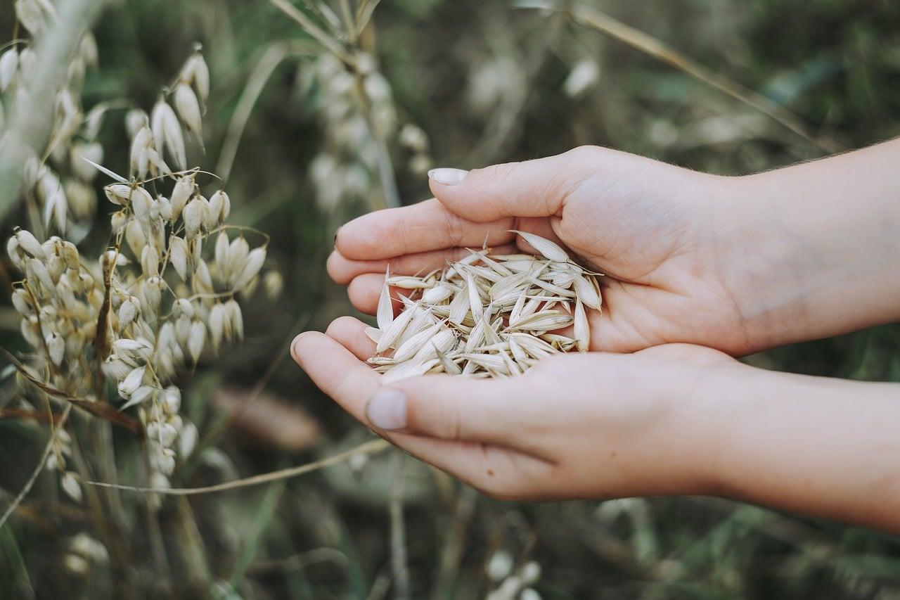 location matériel récolte céréales