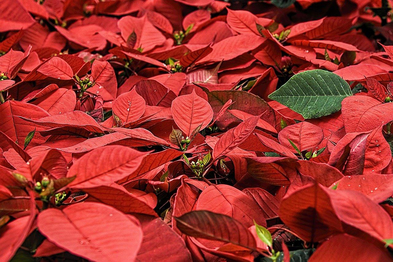 joyeuses fêtes de fin d'année sur les exploitations agricoles
