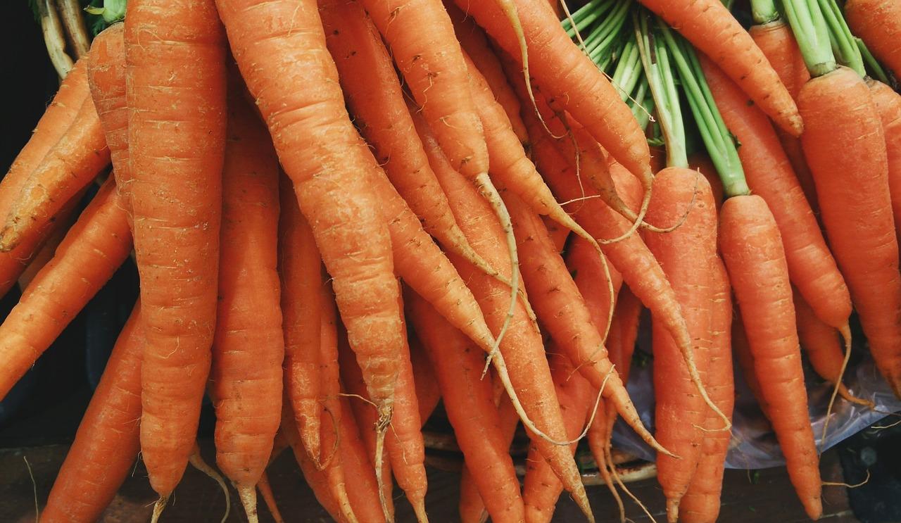 machine agricole récolte de carottes