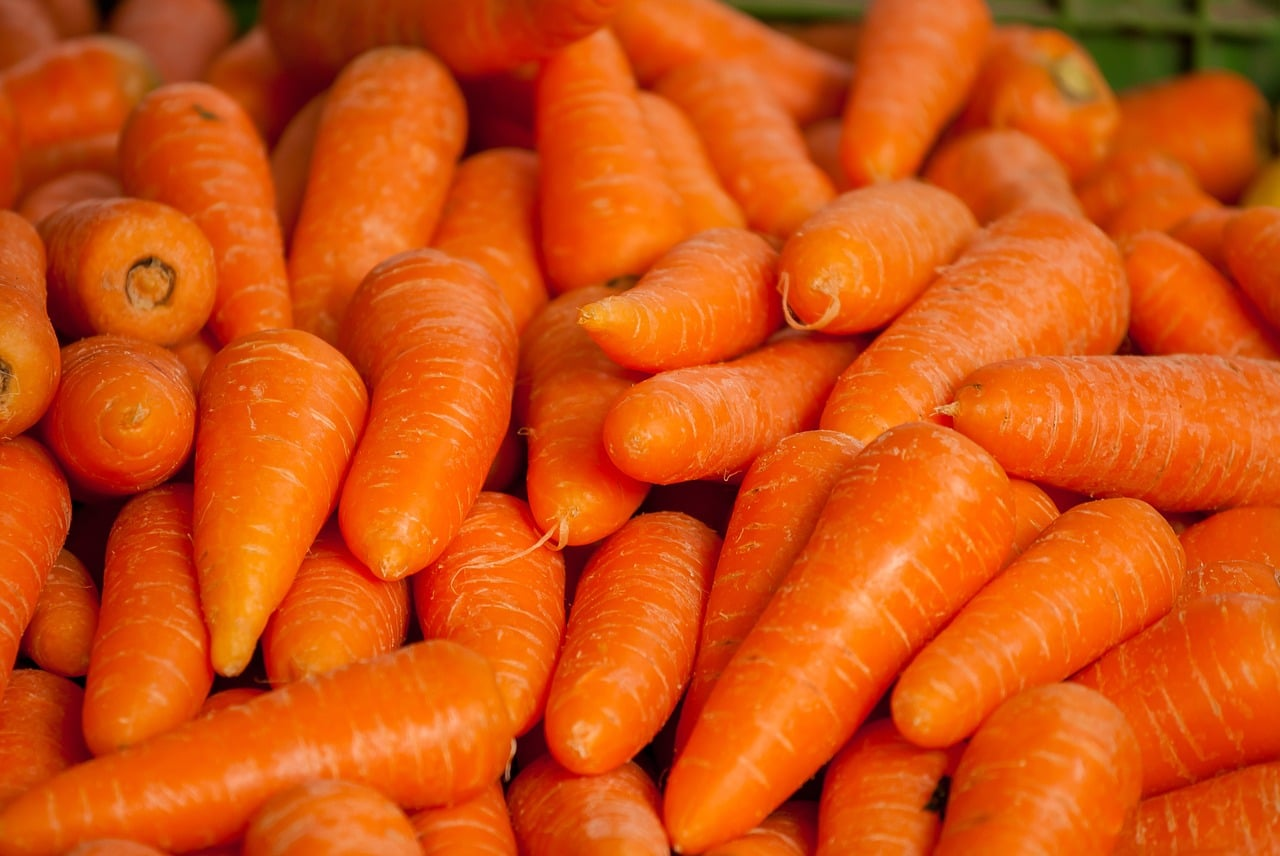 semis de carottes