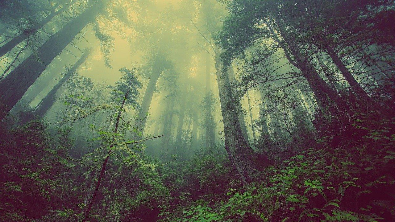 location matériel forestier et pépinière