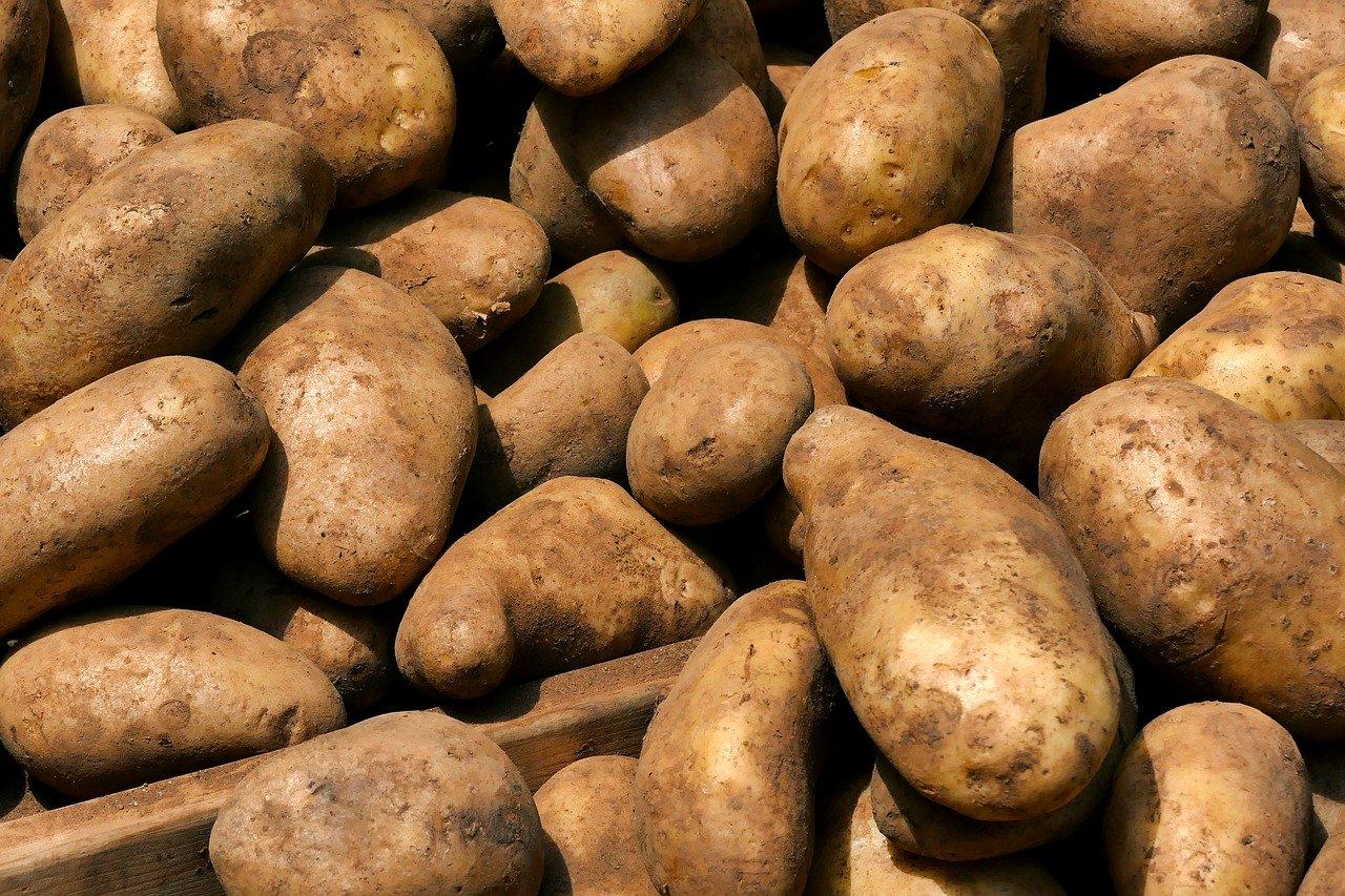 location arracheuse pommes de terre